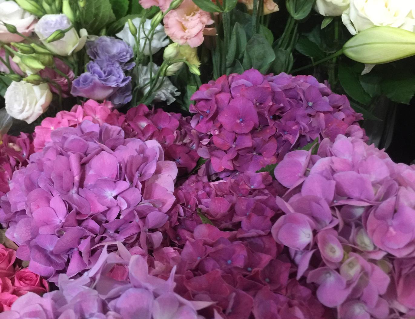 Seasonal quality flowers