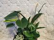 INDOOR Plant Hamper 4 Plants