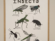 Insects Prints
