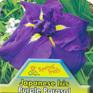 Iris ensata Purple Parasol