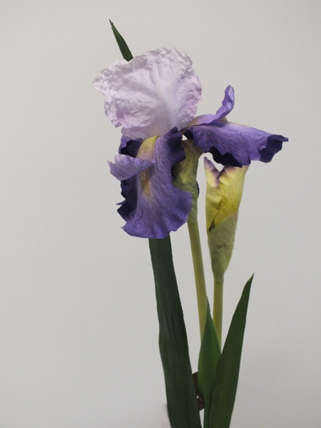 Iris Light Purple 4222