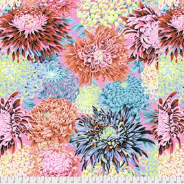Japanese Chrysanthemum Contrast PWPJ041225