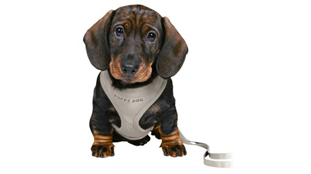 Junior Puppy Soft harness with leash