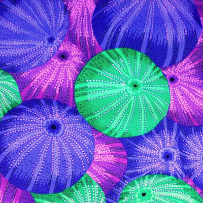 Kaffe Fassett Collective - Sea Urchins Blue