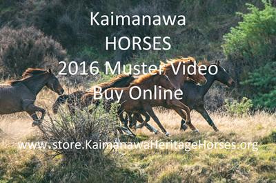 Kaimanawa Muster 2016
