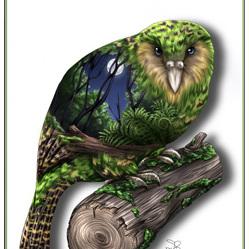 Kakapo Birds Eye View - A4 Print