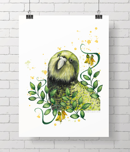 kakapo in pencil - available on A4 and A3