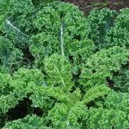 Kale Cert Organic -2 types - 100g