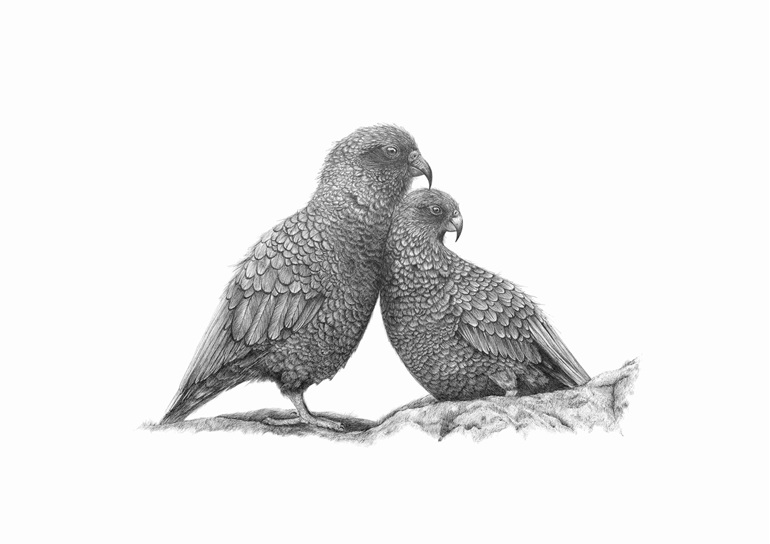 Kea limited edition print
