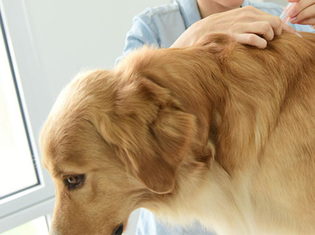 Keeping your pet safe from hazards in Auckland