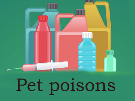 Keeping your pet safe from poisons