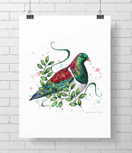 Kereru in pencil - limited edition
