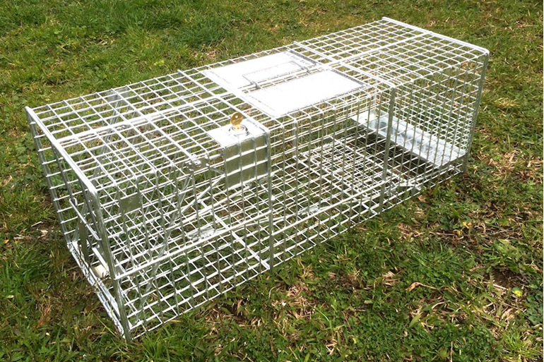 key locking cat cage trap