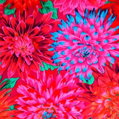 KF Collective - Cactus Dahlias Red