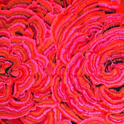 KF Collective - Tree Fungi Pink
