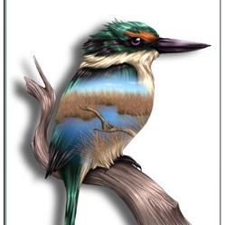 Kingfisher Birds Eye View - Card