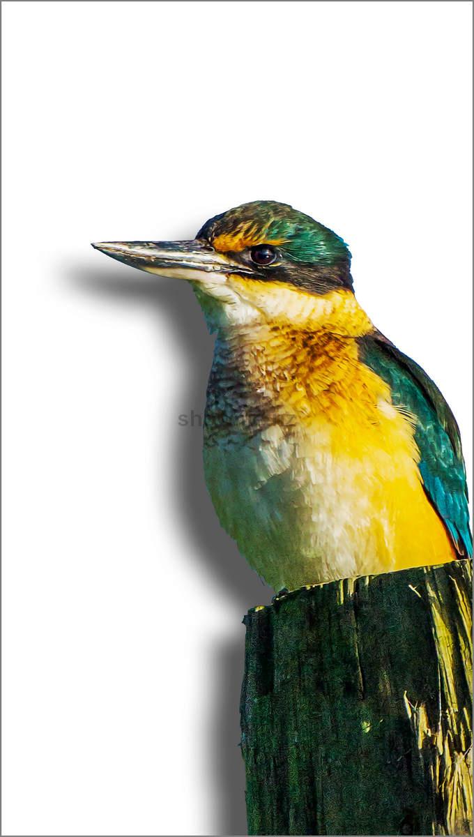 Kingfisher shadow board