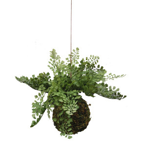 Kokedam hanging moss ball 1988