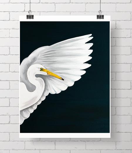 kotuku, white heron