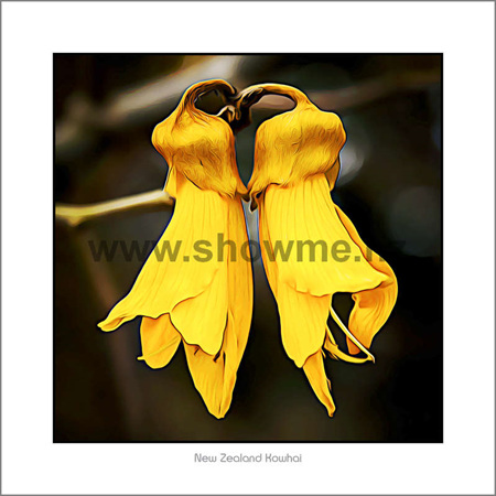 Nz easter gift ideas search giftfind for easter eggs kp03 kowhai shadow board 19 x 19 cm negle Images