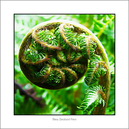 Nz easter gift ideas search giftfind for easter eggs kp04 koru shadow board 19 x 19 cm negle Images