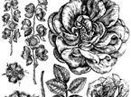 Lady of Shalott IOD Decor Stamp
