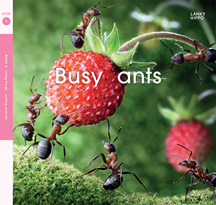 Lanky Hippo: Busy Ants