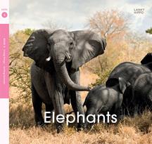 Lanky Hippo: Elephants