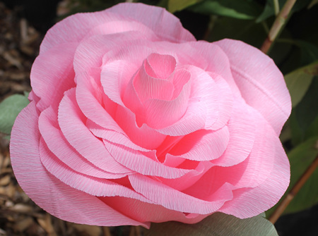 Large crepe paper rose