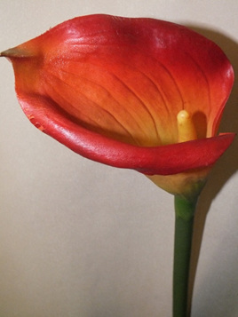 Calla Lily large Orange 1418