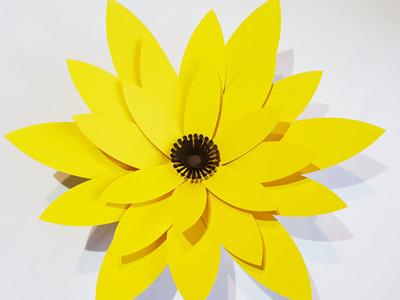 Large Phoebe flower
