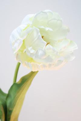 Tulip single stemmed white large head 1134