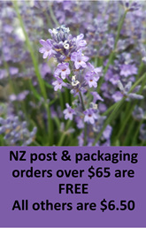 Lavender in New Zealand