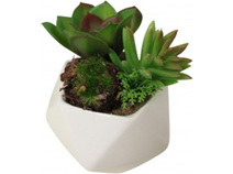 Lavida Fake Mixed Succulent 3