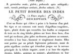 Le Petit Rosier IOD Decor Transfer - small
