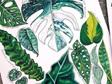 Leafy 11 - A3 Print