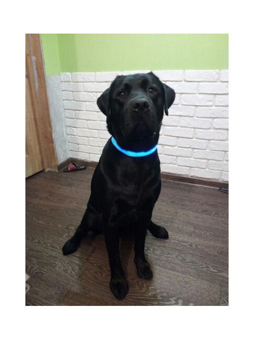 Led Dog Collars Blue