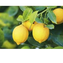 Lemons Cert Organic Approx 100g