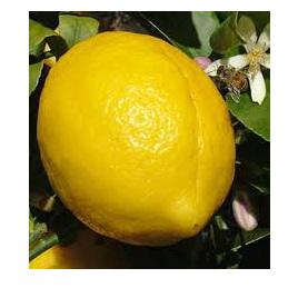 Lemons Certified Organic Approx 500g