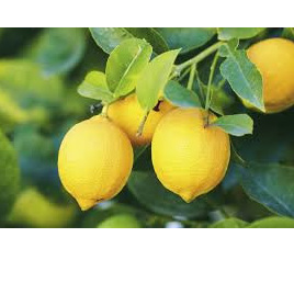 Lemons Local Spray Free Approx 500g