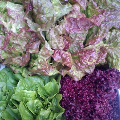 Lettuce Cos Varieties Organic Each