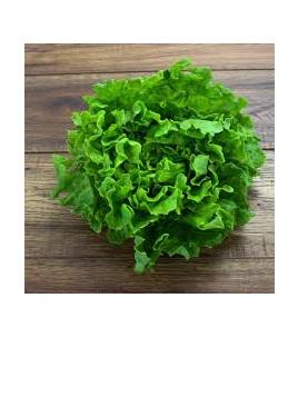 Lettuce Green Frilly, Batavia & Oak Certified Organic Each
