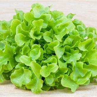 Lettuce Green Oak Organic Each