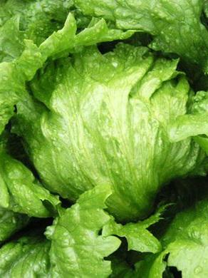 Lettuce Iceberg Organic Each