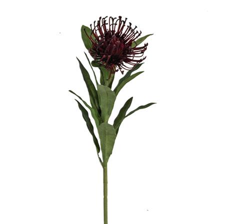 Leucospermum Burgundy 4162