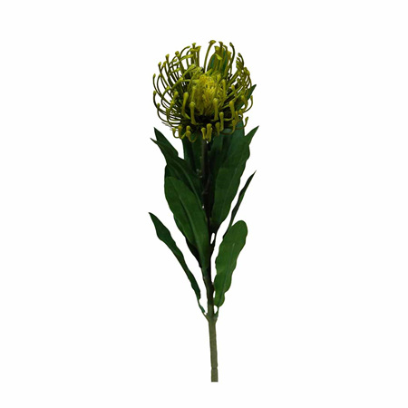 Leucospermum Green 1497