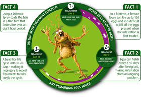 Life Cycle of Nits