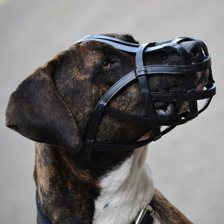 Lightweight Leather Basket Muzzle by Rogue Royalty