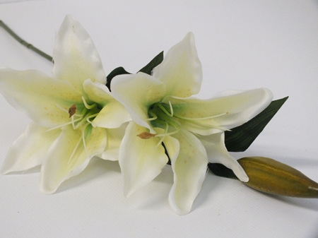 Lily Stem Cream Yellow throat 4251