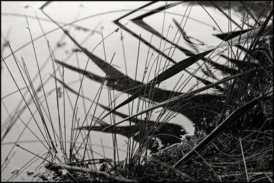 Lines on Water, Mararoa River.